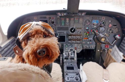 Dog is my Pilot