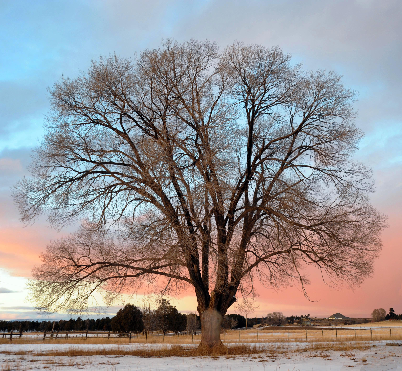 Lorelei Ranch Tree
