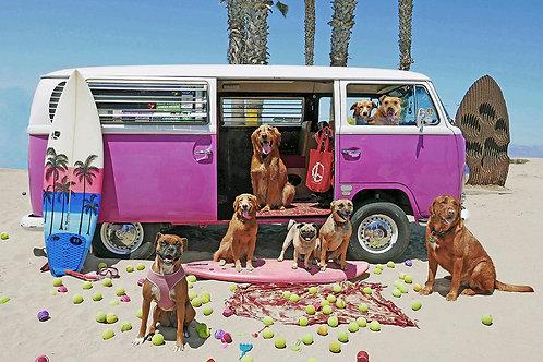 Ball Patrol - Dog Beach