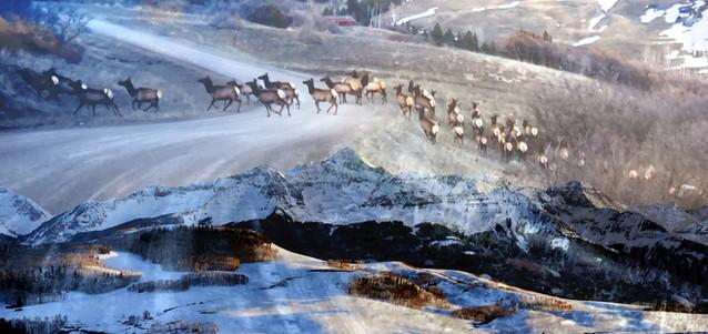 Elk over Wilson