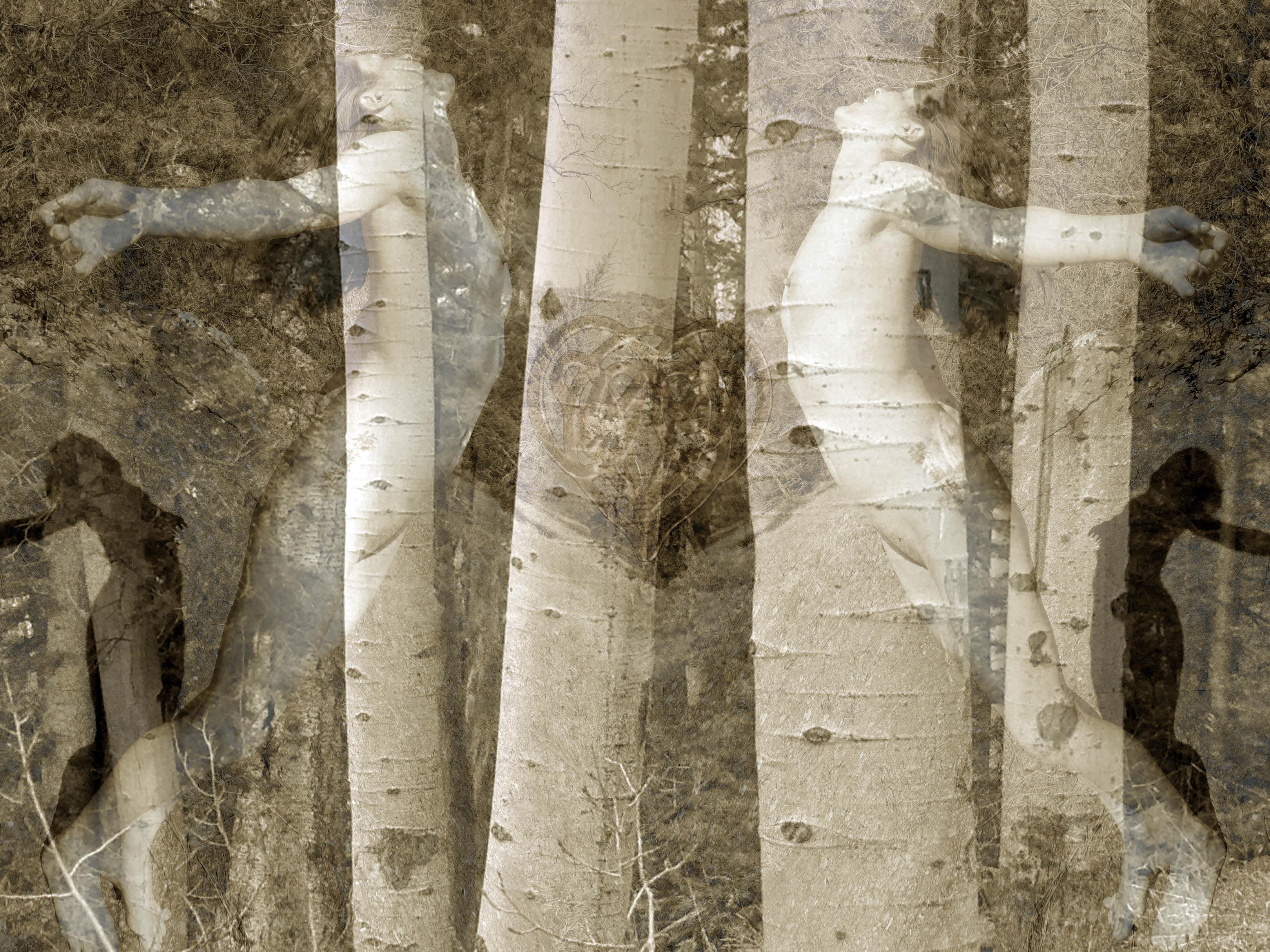 Lorelei Dream Trees