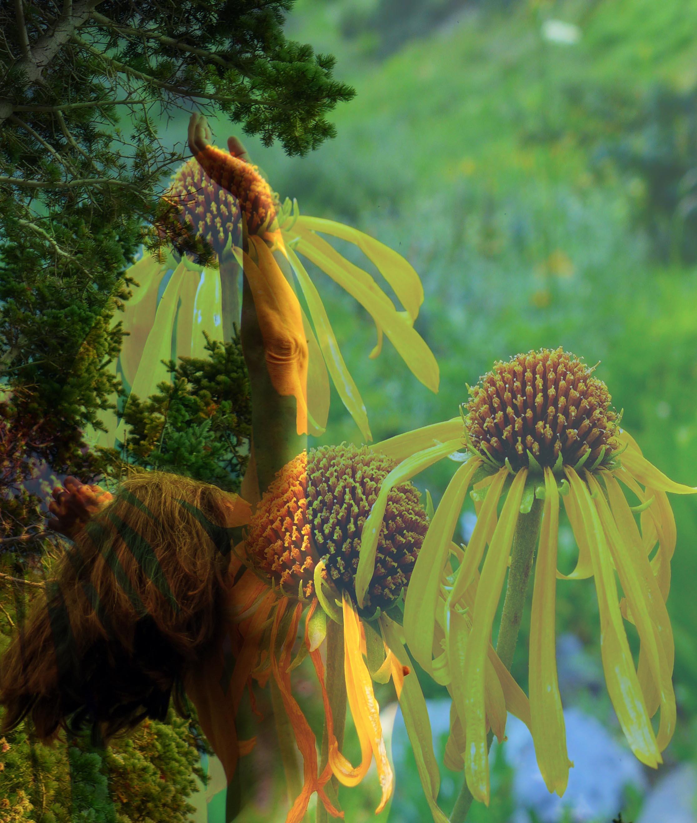 Lorelei Wild Flowers