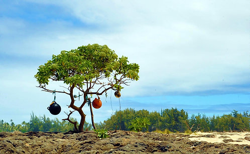 North Shore Tree