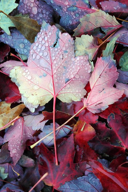 Mapleton Leaves