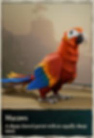 Parrots_edited.png