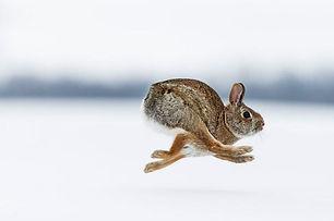 rabbitrun.jpg