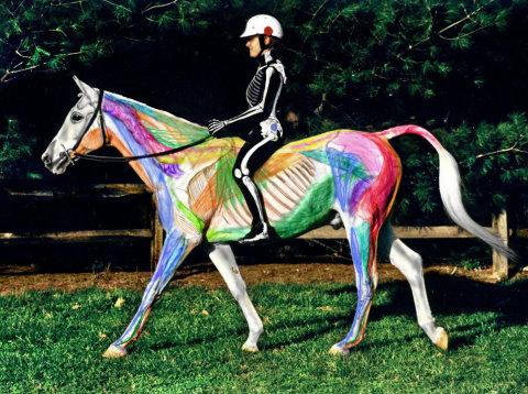 Visible Horse and Rider