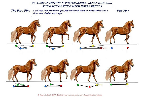 The Gaits of the Gaited Horse Breeds (set of 6)