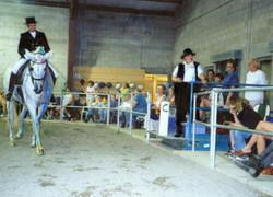Visible Horse Dressage Demo
