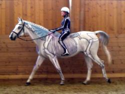 Visible Horse & Visible Rider