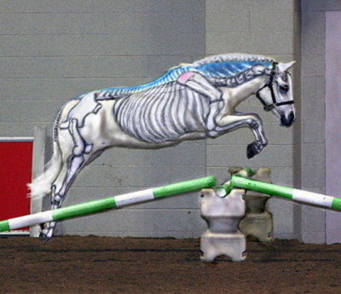 Visible Horse Jumping: Skeleton