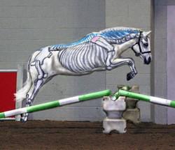 Visible Horse Jumping: Skeleton
