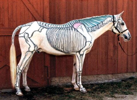 Visible Horse
