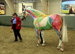 Susan Harris and The Visible Horse