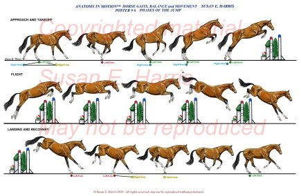 The Gaits (set of 6)