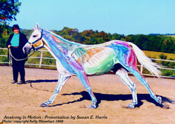 Visible Horse, Maddy: Canter