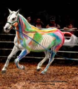 The Visible Horse