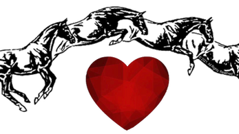 The Heart of a Horse – A Tribute to Susan Harris