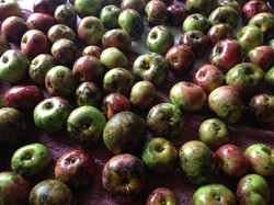 Apples (Don't judge a book by its cover!)