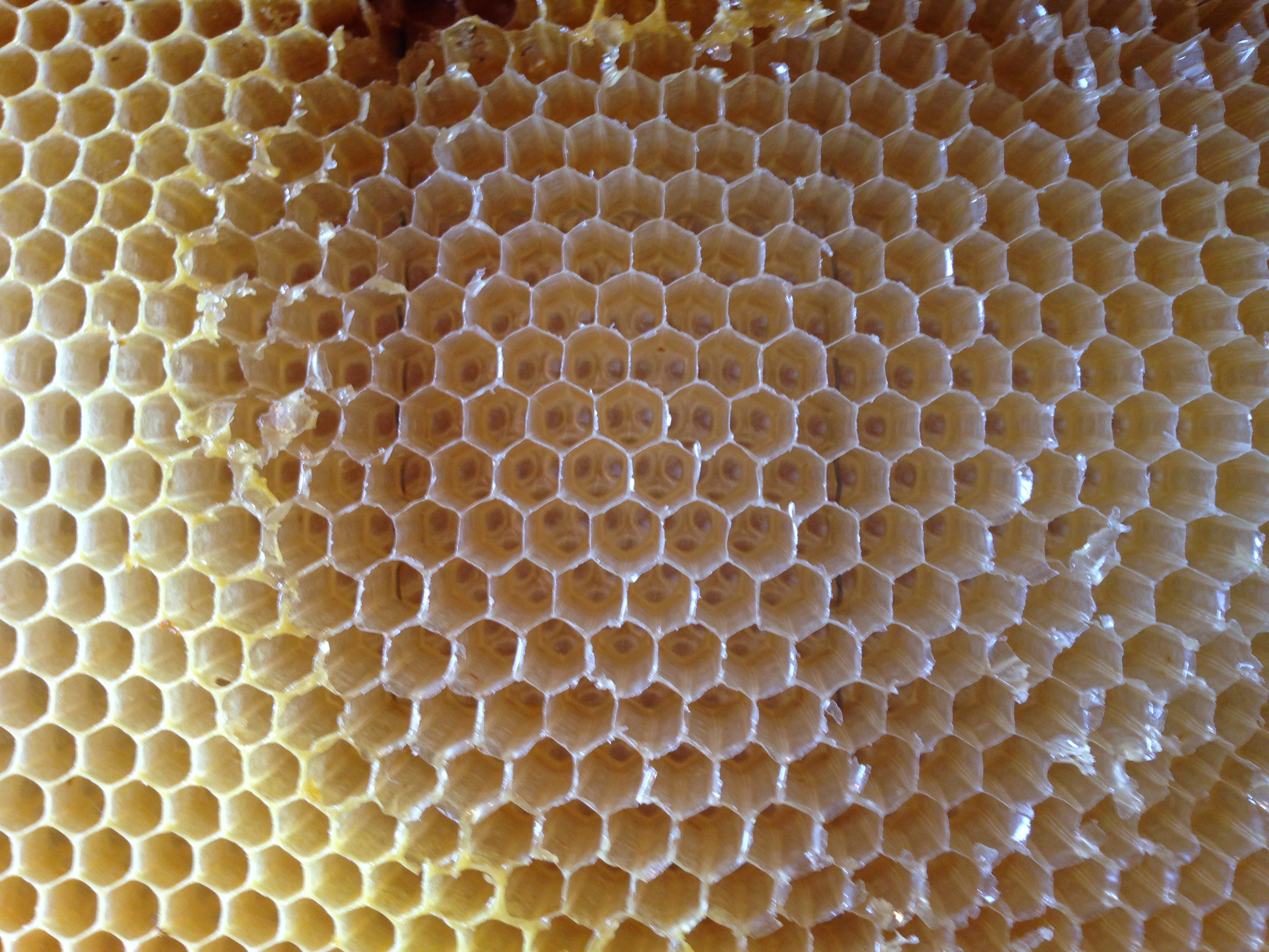 Smiling faces in the honeycomb