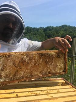 Gather Ye Honey (12)