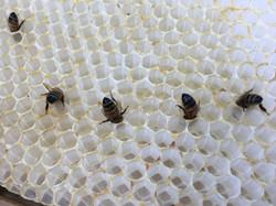 Gather Ye Honey - Bee Butts