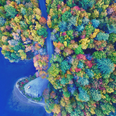 Drone View of Foliage