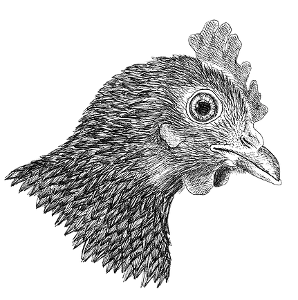 høne.png