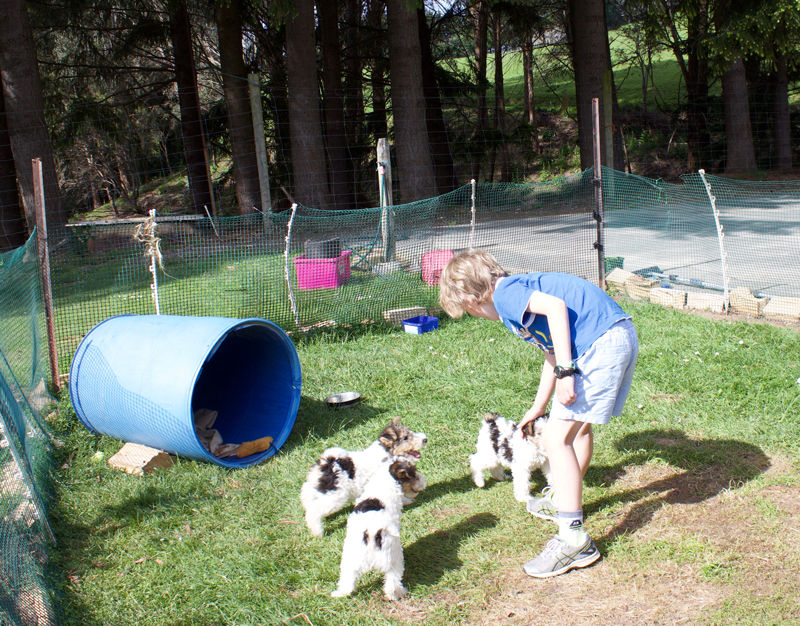 Franza-Guided-Farm-Dunedin-Puppies.jpg