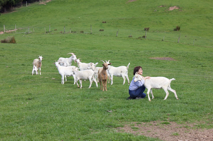 Franza-Guided-Farm-Trekking-Dunedin-Goat