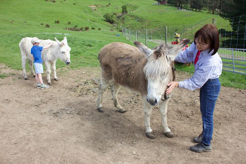 Franza-Farm-Tour-Donkey-Host-Sako.jpg