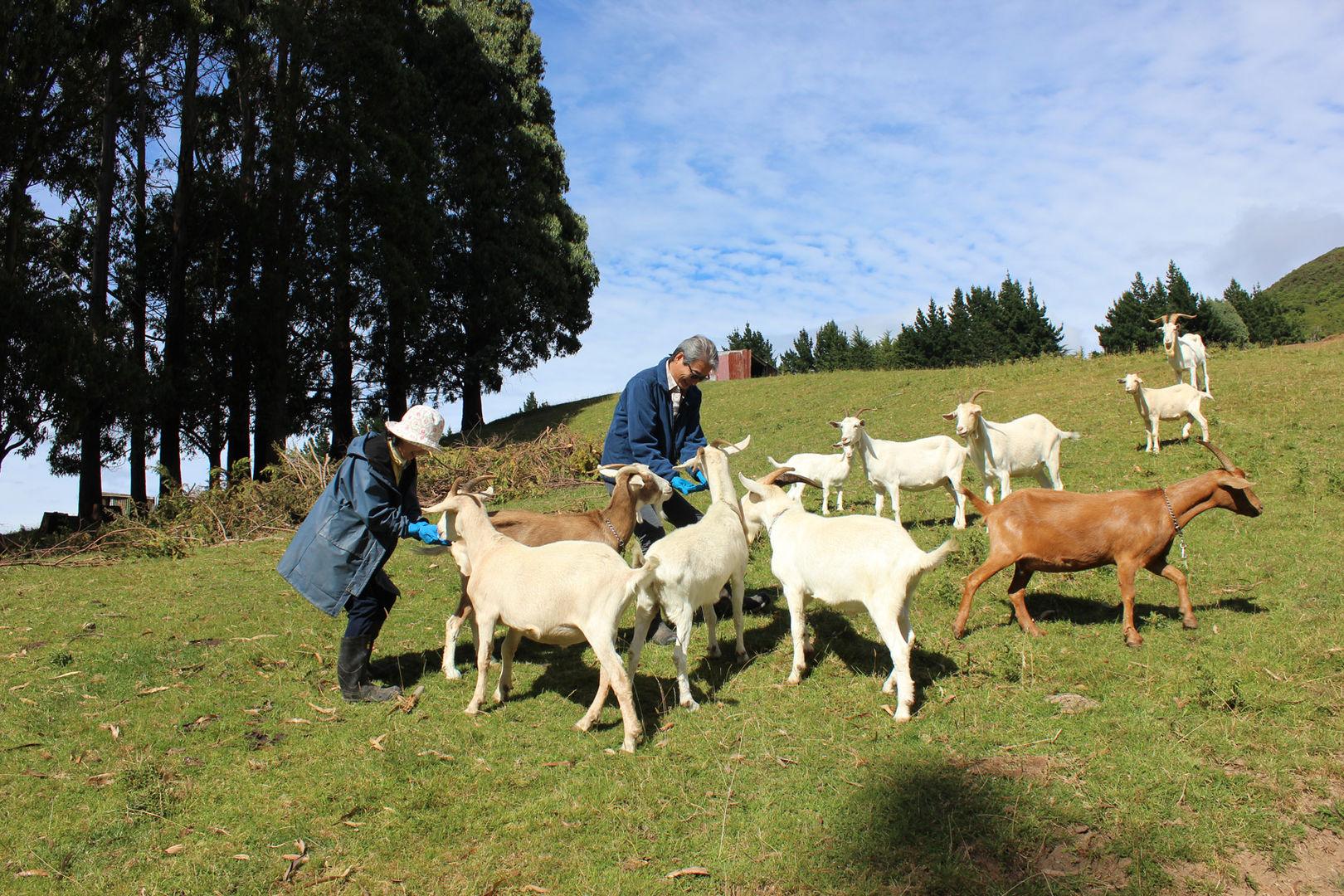 franza-farm-new-zealand.jpg
