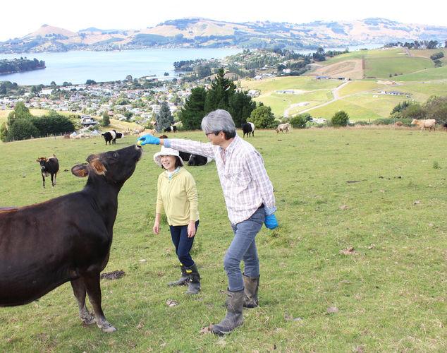 franza-farm-dunedin-nz-cows.jpg