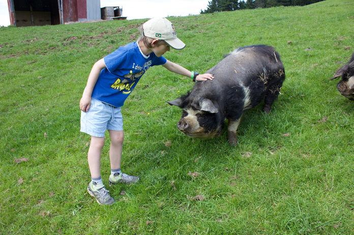 Franza-Farm-Animal-Tour-Dunedin-Pat-Pig.
