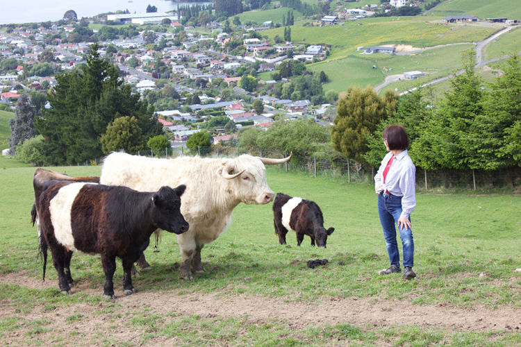 Franza-Farm-Tour-Cows-Dunedin-View-Host-