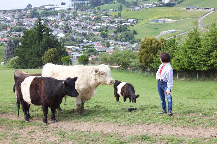 Franza-Farm-Tour-Cows-Dunedin-View-Host-