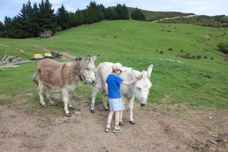 Franza-Farm-Tour-Dunedin-Donkeys.jpg