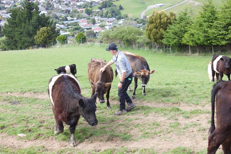 Franza-Farm-Tour-Cows-Host-Andrew.jpg