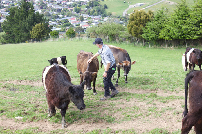 Franza-Farm-Tour-Cows-Host-Andrew.jpg