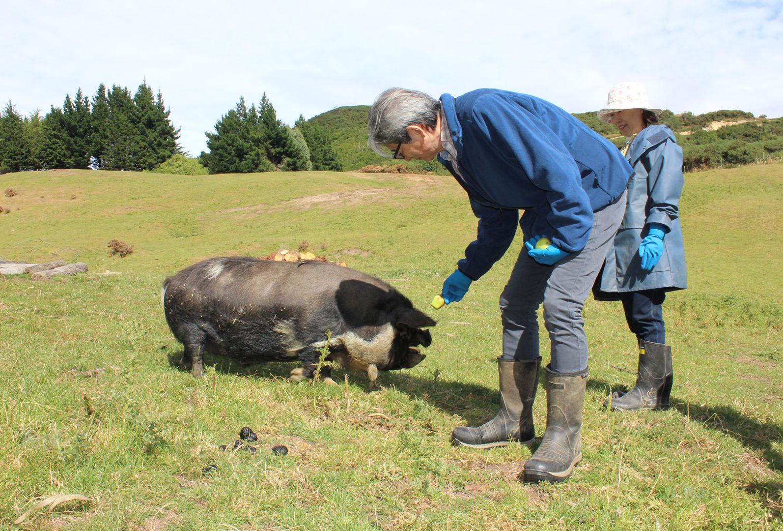franza-farm-tour-animals-pigs.jpg