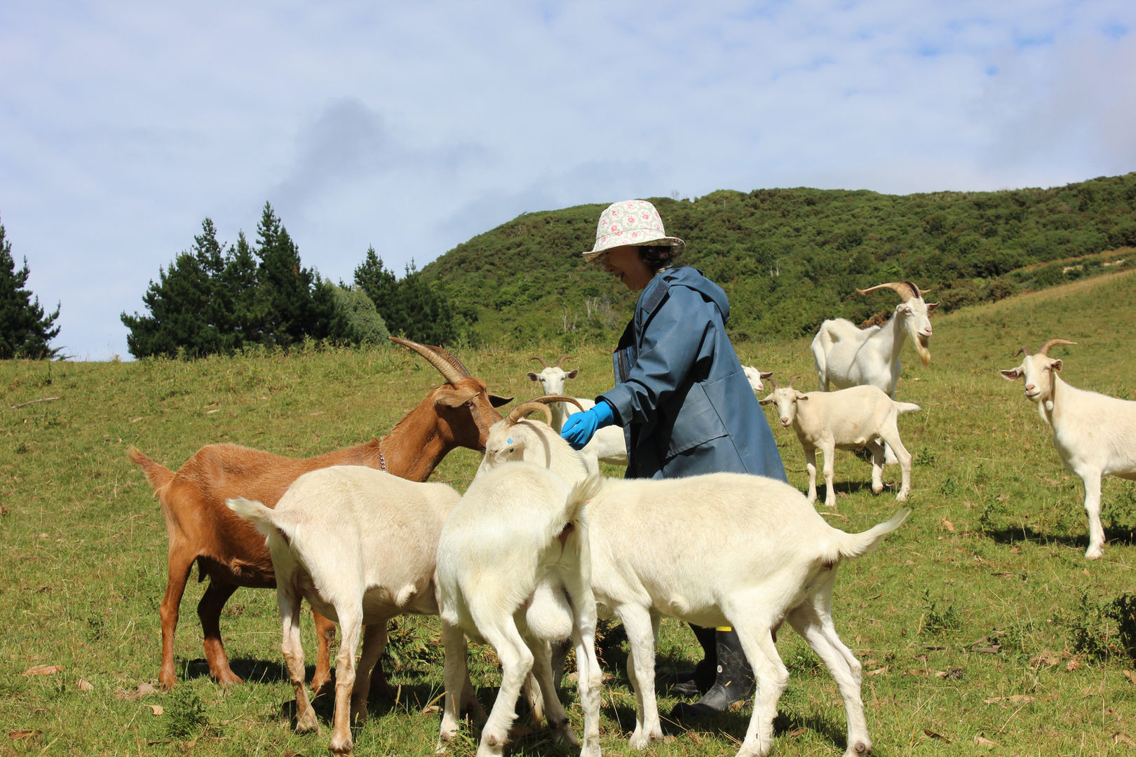 franza-farm-dunedin-new-zealand-feeding-