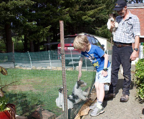 Franza-Guided-Farm-Trekking-Dunedin-Pups