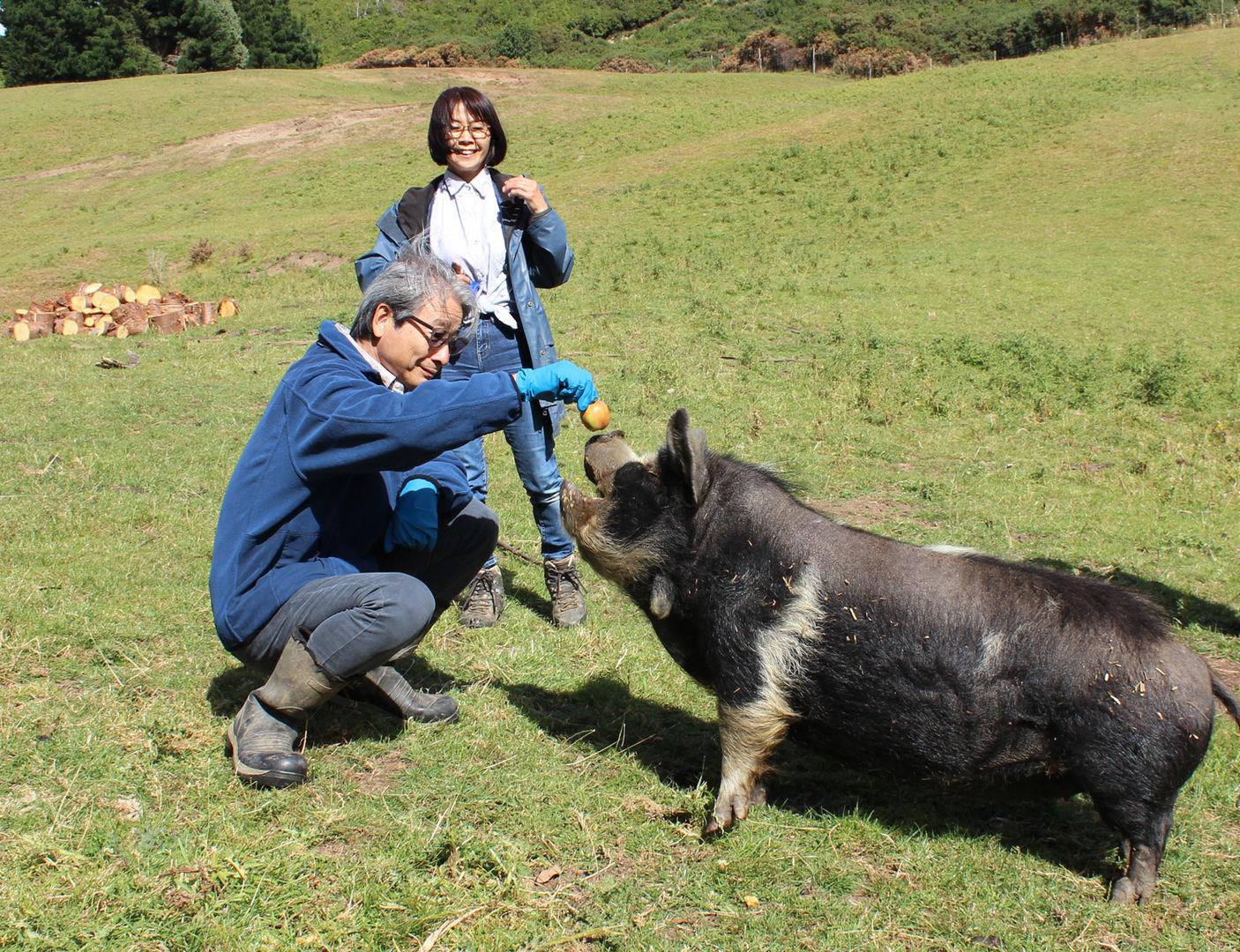 franza-farm-guided-farm-tours-new-zealan