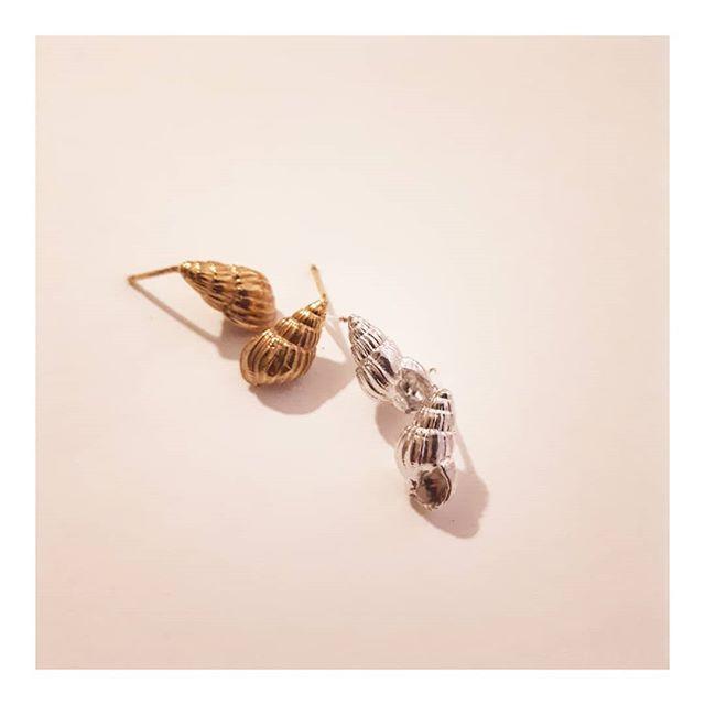 Silver Sea shells