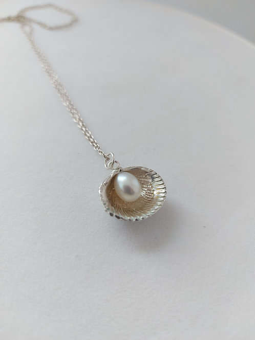 Cockle shell and Pearl