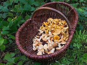 Beautiful fungi foraged by forager Matt Powell