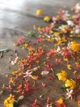 Monk_Blessing_Flowers.JPG