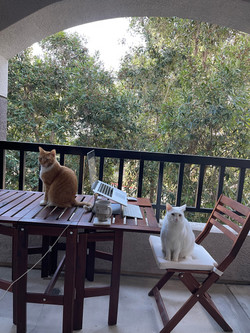 My outdoor office occupied by furry roommates