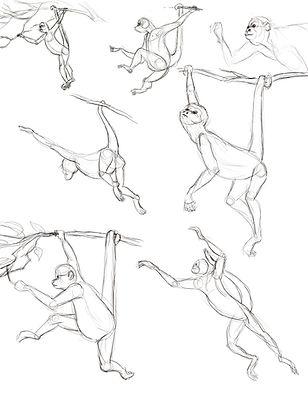 Monkey Observation Sketches.jpg