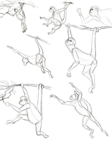 Monkey Observation Sketches